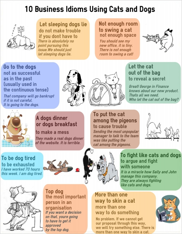 10 бизнес-идиом с кошками и собаками