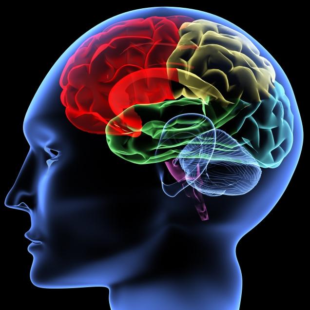 Human-brain-blog